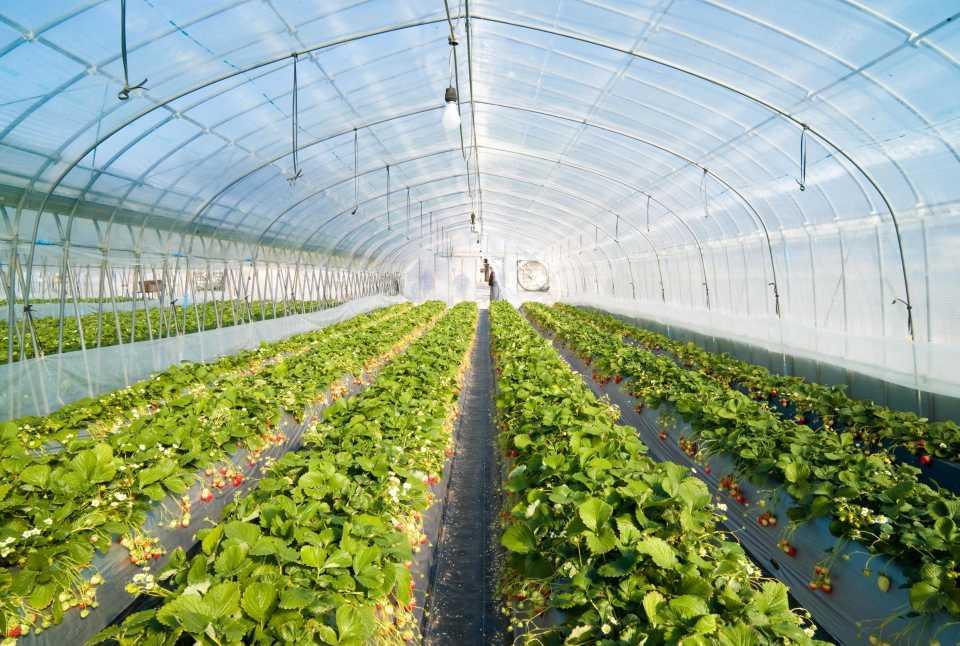 Автономное газоснабжение в сельском хозяйстве